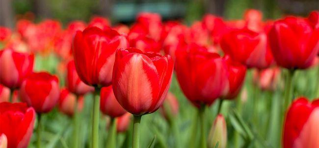 25 mais belas flores vermelhas Photo