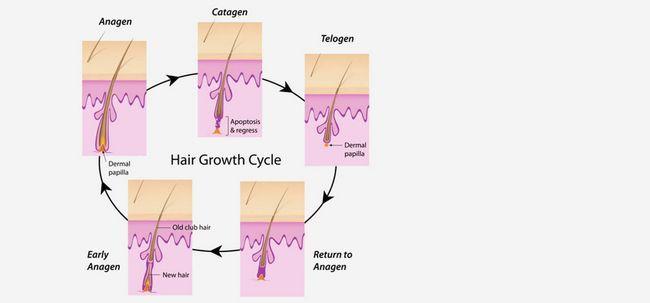 3 fases do ciclo de crescimento do cabelo Photo
