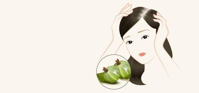 4 remédios naturais para tratar Usando cabelo cinzento Amla Photo
