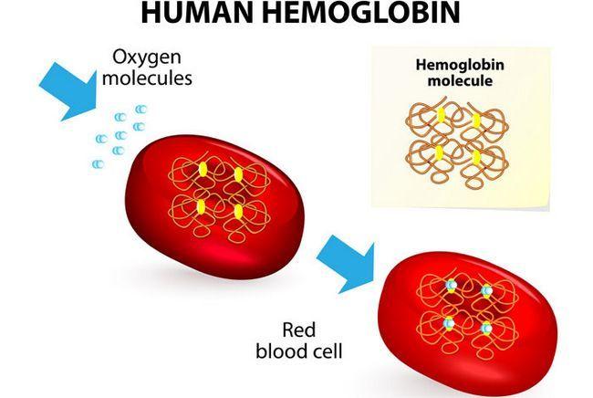 Os alimentos ricos em hemoglobina
