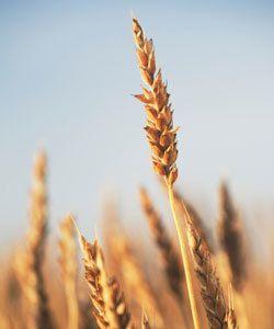 alimentos de ácido fólico para o crescimento do cabelo