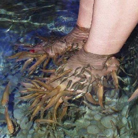 Kenko Reflexologia e Foot Spa