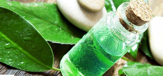 Tea Tree Oil é útil para curar a caspa? Photo