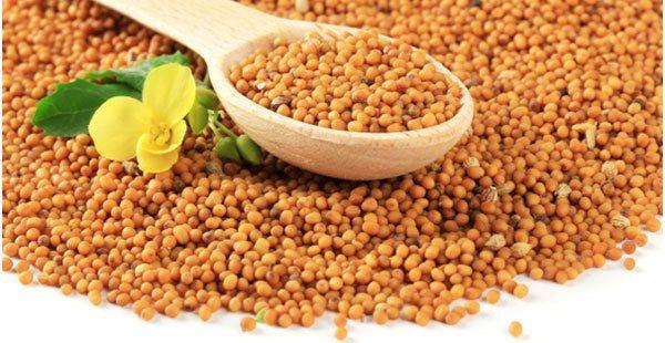 benefícios de sementes de mostarda