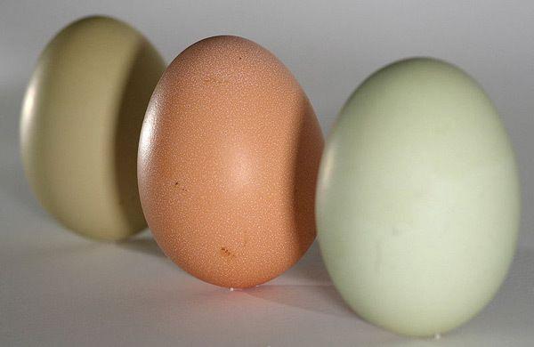 ovo para uma dieta saudável