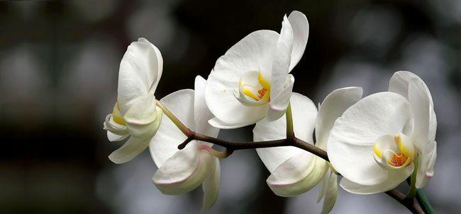Top 25 mais belas flores Branco Photo